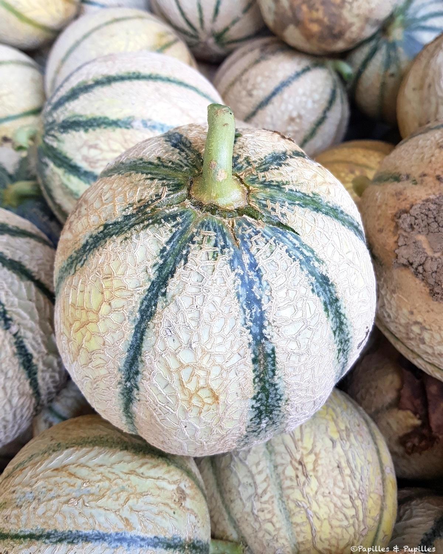 Melon tournant