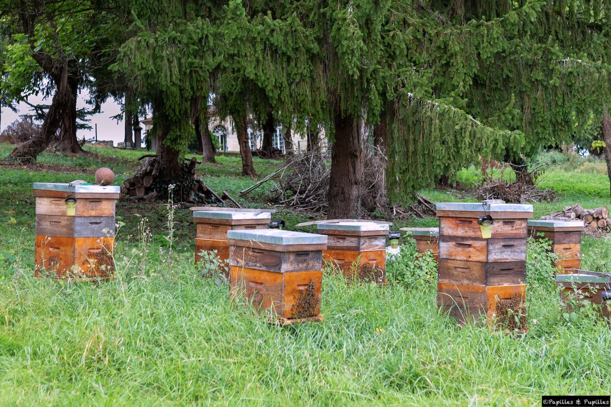 Les ruches du Château Barre-Gentillot