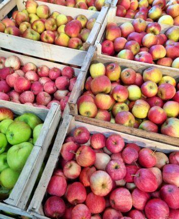 Pommes bio et éco-responsables