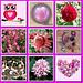 rose mosaique - 30
