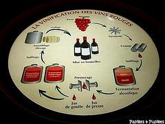 Image Papilles et Pupilles - Planète Bordeaux
