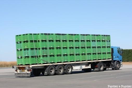 Camion plein de Palox acheminant les melons