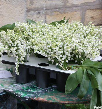Bouquets de muguet