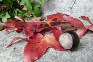 KKVJ – Couleurs d'automne