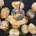 Petits pains en bandérilles