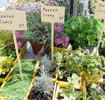 Plantes aromatiques originales