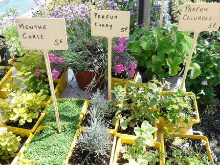 Plantes aux mille saveurs