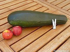 courgette géante
