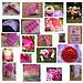 Mosaique rose