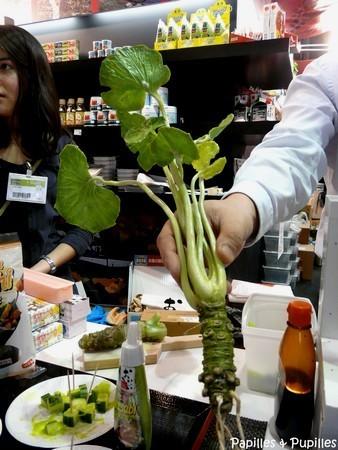 Okonomiyaki wasabi yuzu et compagnie le japon au salon for Plante wasabi