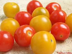 Tomates cerises rouge