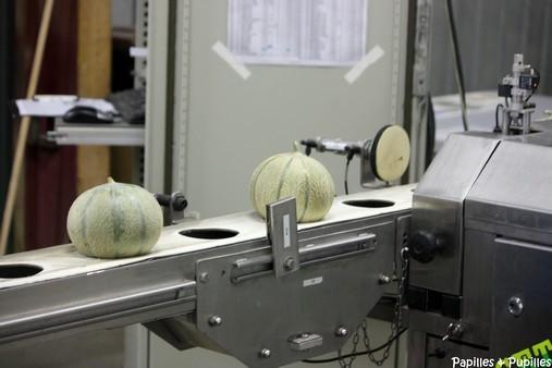 Vérification du taux de sucre du melon