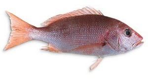 Vivaneau - red snapper