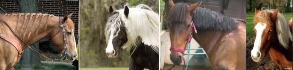 coiffure de chevaux