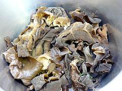 Champignons Oreilles de Chat