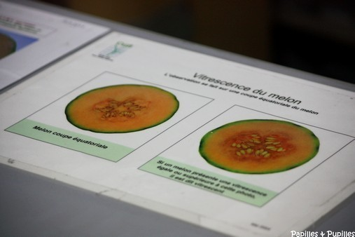Vistrescence du melon