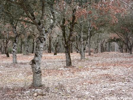 Comment trouver des truffes sous un chene - Comment trouver le nom du proprietaire d un terrain ...