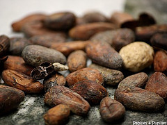 Fèves de cacao - Chocolaterie Lamy - Brive la Gaillarde