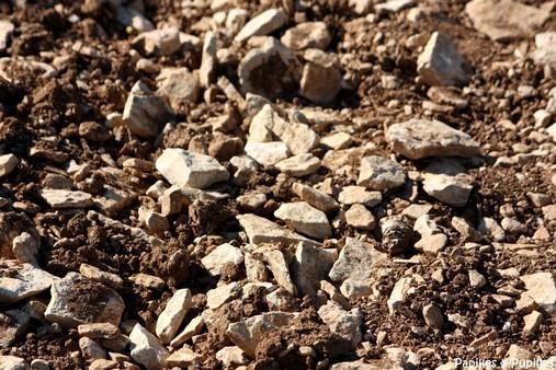 Terre argilo calcaire