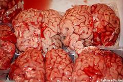 cervelles