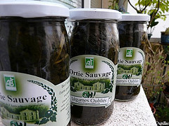 orties sauvages
