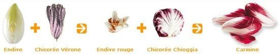 Image Papilles et Pupilles - Carmine - Salade carmine