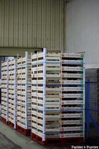 Palettes de melon cerclées et étiquetées